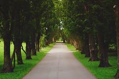 DSC04126_01 (Matthias J.W.) Tags: trees oslo norway alley sony botanicalgardens allee botaniskhage