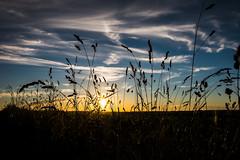 Just another sunset (mr_kuchen) Tags: blue sunset sky sun black nature grass silhouette clouds landscape nikon sonnenuntergang outdoor natur himmel wolken blau landschaft sonne grainfield d7200