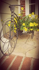 Flower in a bike (jok33) Tags: frontporch bike flowerholder yellowflower