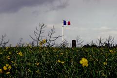 D933 - Marne (51) Grand Est (Didier Hubert Photography) Tags: france countryside photographie flag ciel agriculture nuages campagne drapeau environnement marne colza grandest drapeaufrançais d933 didierhubert didierhubertphotographe