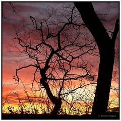 welcome Sun (www.xavierfargas.com) Tags: red espaa orange naturaleza sun tree sol nature silhouette sunrise landscape arbol spain flora europa europe alba paisaje panasonic amanecer silueta naranja breathtaking santander cantabria xfp dmcfz50 lumixdmcfz50 platinumheartaward goldstaraward breathtakinggoldaward toisndeoro xavierfargas p1130396 dawnrojo breathtakinghalloffame