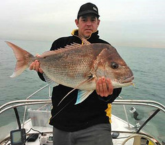 Huge bay snapper (alfcfishing) Tags: fishing american legacy gloomis