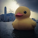 Hello, Ducky