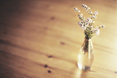 thyme in a vase