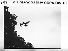 Birds in the clouds (firefly_0815) Tags: auto white birds lomo lomography pentax 110 d76 balck orca hôteldevilledeparis