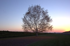 Tree at sunset (Lauren P. Arfman) Tags: sunset tree fall pregamewinner