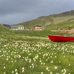 Eriophorum, and red boat thumbnail