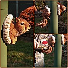 It's True-squirrel feeds birds! (MissyPenny) Tags: bird squirrel birdseed pennsylvania birdfeeder decor yarddecor feedthebirds pdlaich missypenny