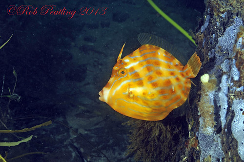 Mosaic Leatherjacket.