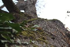 Küçük Çamlıca Ağaçları
