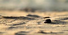Muschel im Sand (gutlaunefotos ☮) Tags: strand sand muschel