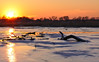 Frozen Darby Creek sunset