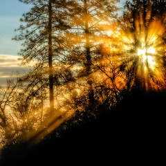 Burst of Light (stephencurtin) Tags: california county light sun sunlight color highway day time el pines photograph 49 rays digger dorado filtered thechallengefactory thepinnaclehof tphofweek253