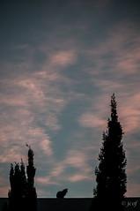Oteando en Campo Santo. (jcof) Tags: city sky color portugal cemetery cat cementerio ciudad noviembre gato cielo cypress algarve cipreses cacelavelha