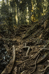 Camino milenario (Alex.Spencer) Tags: road trees patagonia forest rainforest forests bosques cochamo