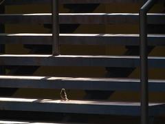 Alguien habita esas escaleras. (Ingeraldine) Tags: luz ave escaleras