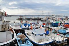Sile marina (Krasivaya Liza) Tags: sea vacation fish water turkey mar seaside fishing village shoreline culture shore blacksea turkish cultural sile