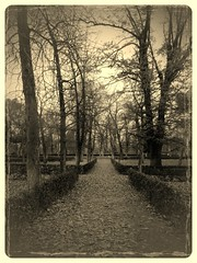 guided (toutsi19) Tags: madrid park autumn trees plants garden spain flora symmetrical bushes pathway aligned flickrandroidapp:filter=wallaby