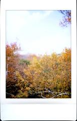Autumn (K e v i n) Tags: autumn trees arizona fall film nature leaves analog outdoors sedona az scan foliage instantcamera creekside instantfilm fujifilminstaxmini epsonv500 november162013 fujiinstaxmini8