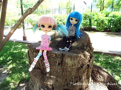 Pink and blue (Karu Aileas) Tags: park pink blue parque azul doll chelsea rosa plastic groove pullip tronco akemi mueca