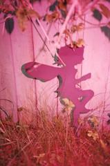 Fairy in my Garden (imogencallaway) Tags: pink color film 35mm garden lomo lca lomography cornwall flash colorsplashflash fairy splash