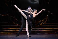 Swan Lake Dance Highlight: The Black Swan Pas de deux