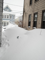 It's official, they will never move (eik0ph) Tags: snow boston depression omd em1 givingup snowpocalypse snowverachievers
