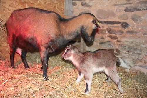 Nesting with newborn