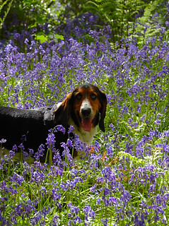 eric in the bluebells