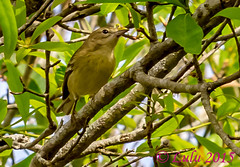 Palm Warbler (lh24smile) Tags: green bird nature center palm wetlands cay warbler
