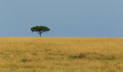 Maasai Mara (dragoms) Tags: africa kenya mara maasaimara frica qunia dragoms