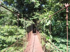 """La Réserve de Monteverde: le pont suspendu <a style=""""margin-left:10px; font-size:0.8em;"""" href=""""http://www.flickr.com/photos/127723101@N04/26339477354/"""" target=""""_blank"""">@flickr</a>"""