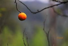 (Dariush.M) Tags: autumn fall nature persian iran     guilan dariushmohammadi