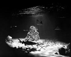 Rekinarium (Pawell31) Tags: mamiya 50mm zoo aquarium delta warsaw agfa rodinal 3200 ilford rb67 sekorc