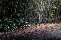 Little Trees (pillarsoflight) Tags: light plants brown white black tree green beauty leaves oregon 35mm portland prime moss aperture nikon pavement branches adobe pdx tall 18 pnw lightroom d3300