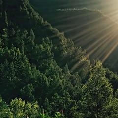 Sidebeamed (s_desilva) Tags: trees sunrise indonesia sunlit surabaya iphone mountbromo