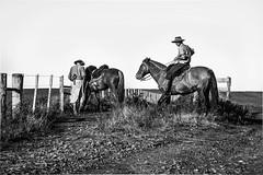 'Campereando..' (Suzana Fernandes Fotografia) Tags: horse rio rural caballo grande do sombra campo cavalo sul lida campanha gaucho coxilhas campeiro tupancireta