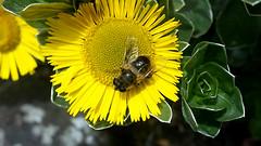 owad (marta.pocztarska) Tags: flower macro bug insect flor mucha insecto macrophotography kwiat owad