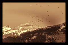 Explosin de libertad. (Yoli Of Shalott (Off for a couple of weeks)) Tags: espaa mountain mountains birds landscape libertad freedom nikon paisaje pajaros aragon monte montaa ordesa vuelo volar d3100