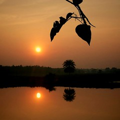 ~sunset~ (~~ASIF~~) Tags: sunset sky tree silhouette canon dark leaf outdoor dusk serene