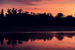 Palm Beach (streese01) Tags: beach surfing panama santacatalina esterobeach veraguas mamaines chiriqugulf