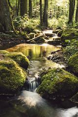 Just how i like it... (Dominik Chalupnk) Tags: sunset nature forest canon long exposure 1750 tamron lightroom preset 600d vsco vscocam