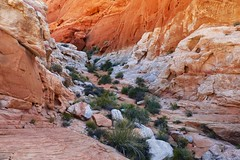 valley of fire state park, nevada (twurdemann) Tags: statepark morning colour valleyoffire landscape unitedstates nevada canyon erosion ravine mojavedesert americansouthwest redsandstone viveza fujixt1