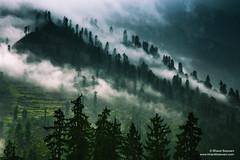 The view from Kalga, Himachal Pradesh (Bharat Baswani) Tags: trees cloud mountains green rain pine forest factory magic jungle valley magical himachal himalayas pradesh parvati kalga incredibleindia