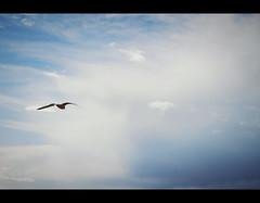 (Chapter-Four) Tags: ocean cloud storm france bretagne nuage mouette ocan