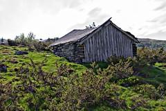 Saltaket utle - - Decaying shed (erlingsi) Tags: utvikfjellet nordfjord noreg norway decay sogn norwegen june einer junipers