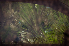 IMGP2209 (jamin.sandler) Tags: pentaxistds supermulticoatedmacrotakumar14100mm smcmacrotakumar100mm