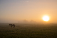 Sunrise a misty morning (Infomastern) Tags: horse mist fog sunrise landscape countryside soluppgng landskap dimma hst geolocation sdersltt landsbygd geocity camera:make=canon exif:make=canon geocountry geostate exif:lens=efs18200mmf3556is exif:focallength=24mm exif:aperture=80 exif:isospeed=100 camera:model=canoneos760d exif:model=canoneos760d