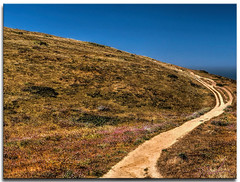 more of the trail (fotomark.net) Tags: color landscape marincounty wildflowers tomalespointtrail