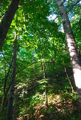 Forest (wackybadger) Tags: tree wisconsin forest nikon slope nikond60 lacrossecounty wisconsinstateforest wisconsinstatenaturalarea sigma1020mmf4exdchsm bergprairiebillygoatridgesna sna596 couleeexperimentalstateforest
